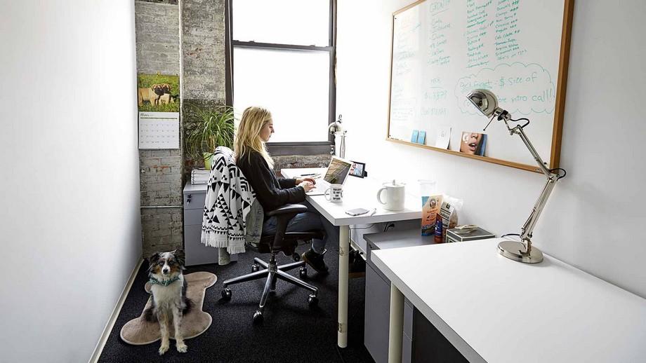Mẫu thiết kế phòng làm việc trong không gian làm việc chung có thể mang theo thú cưng