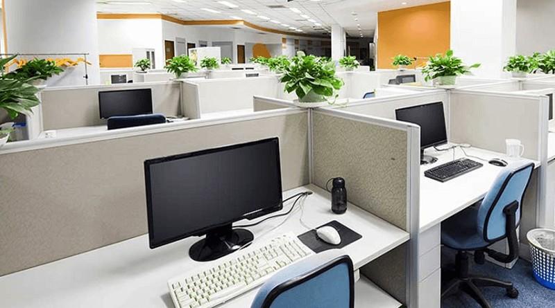 Thiết kế cây xanh trong văn phòng