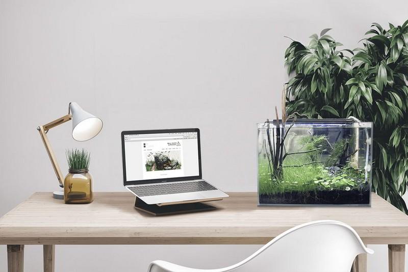 Trên bàn làm việc của người mệnh Mộc có thể trưng bày bể cá mini, cây thủy sinh...